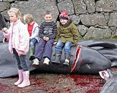 Children of the Faroe Islnds, showing no respect for the slaughtered pilot whales.