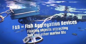 image of a FAD (Fish Aggregation Device)
