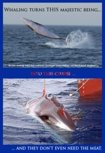 This is the amazing transformation performed by whaling